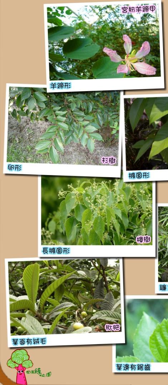 樹木鑒賞:樹葉形狀